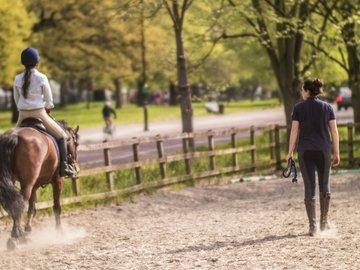 Our neighbourhood hyde park life stables